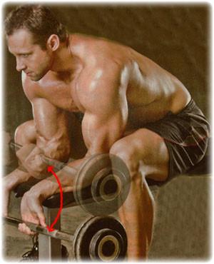 træning af underarm og håndled